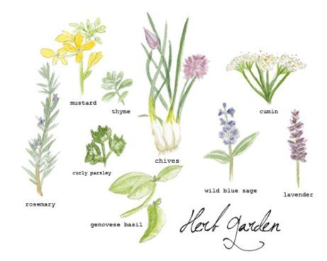 Herb Garden by Haley Harmon