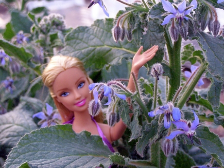 Barbie and Borage