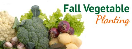 Fall Vegetable Planting